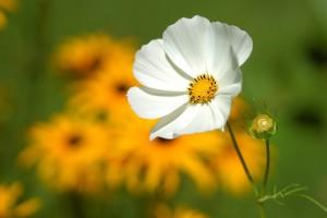 flower-180035_640